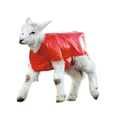 Lamb Blankets - 50 Pack