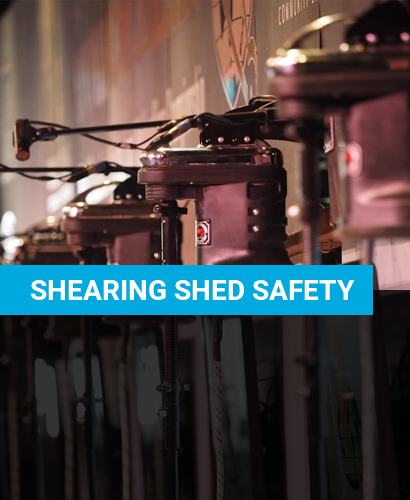 Shearing Shed Safety