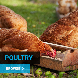 Poultry Supplies NZ