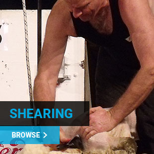 Shearing Supplies NZ